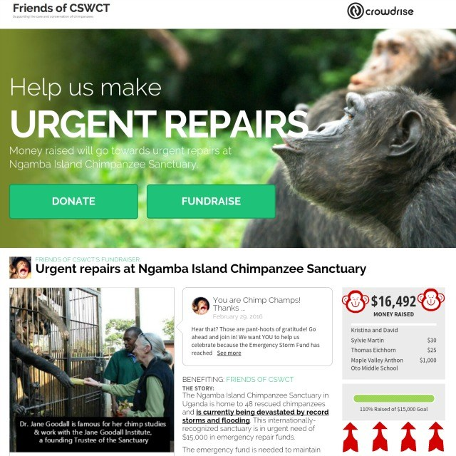 friendsofchimps.org is a registerednon-profit that raised donations for the Emergency Storm Fund at Ngamba Island Chimpanzee Sanctuary in Uganda.